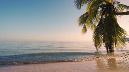 dominikana : Palm tree on the tropical beach, dancing waves on the sand