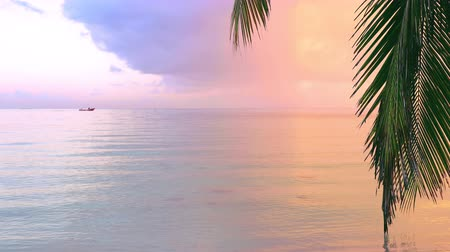 bermudas : Beautiful sunrise over the exotic beach. Tropical sea waves under the blue sky. Stock Footage