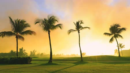 фарватер : Golf course in tropical island, beautiful sunset with exotic palm tree silhouettes