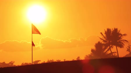 palmtree : Golf course field. Sun, palm trees and flag in the tropical island during beautiful sunset