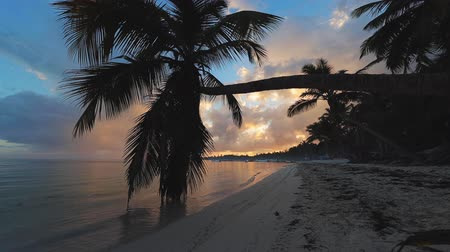 barbados : Exotic beach. Coconut palm trees against sunrise tropical sky with clouds. Summer holiday in the tropics.