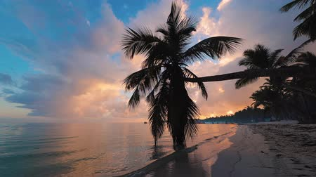 dominican : Exotic beach. Coconut palm trees against sunrise tropical sky with clouds. Summer holiday in the tropics.