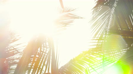jamajka : Abstract sunlight rays between palm tree leaf and warm tropical rain Wideo