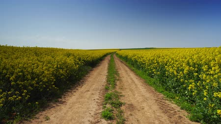 rape oil : Rapeseed field and path in the farmland Stock Footage