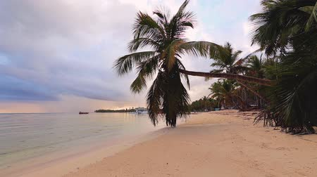 barbados : Beautiful sunrise over the tropical beach and exotic palm tree