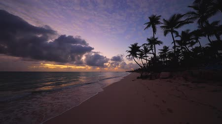 barbados : Tropical paradise island beach and sea with coconut palm tree for holiday and vacation