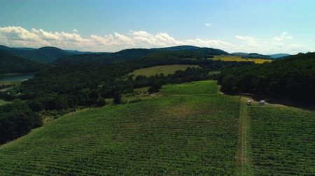 vinná réva : Aerial view over vineyard field in valley, Europe Dostupné videozáznamy
