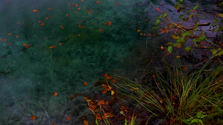 plitvice : Clear water in lakes and autumn forest in Plitvice National Park, Croatia