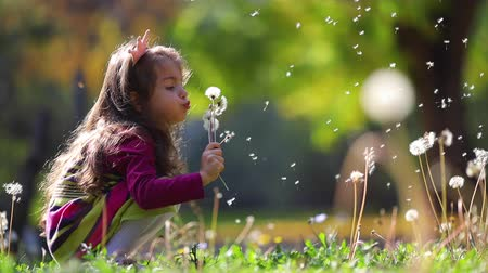 despreocupado : Cute little girl blowing  dandelions in autumn park. Wishes, dreams, playtime. Stock Footage