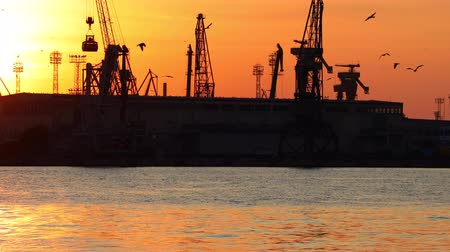 delfín : Dolphin and flying birds over the sea port Varna, Bulgaria. Silhouettes of industrial cranes and cargo ships