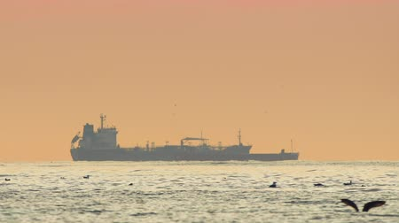 sea gull : Cargo ship sailing in the ocean. Beautiful sea sunrise