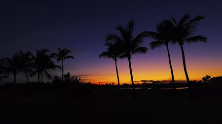 golfjátékos : Golf course in the tropical island, beautiful sunset with palm trees silhouettes video