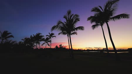 palmtree : Golf course in the tropical island, beautiful sunset with palm trees silhouettes video