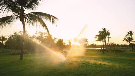 фарватер : Golf course sprinkler on fairway during golden sunset