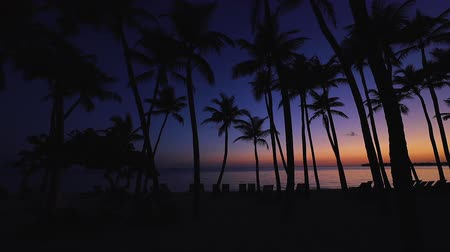 fiji : Sunrise over tropical island beach and palm trees. Punta Cana, Dominican Republic. Stock Footage