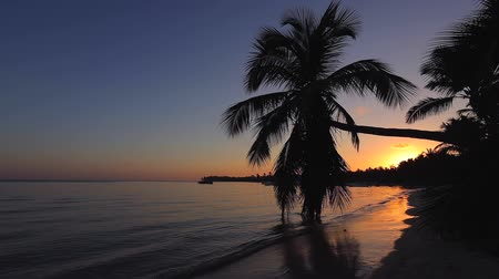 dominikana : Sunrise over tropical island beach and palm trees. Punta Cana, Dominican Republic. Wideo