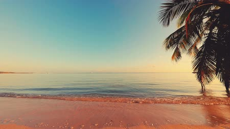 barbados : Sunrise over tropical island beach and palm trees. Punta Cana, Dominican Republic. Stock Footage