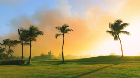 golfové hřiště : Golf course in the tropical island, beautiful sunset with palm trees silhouettes video