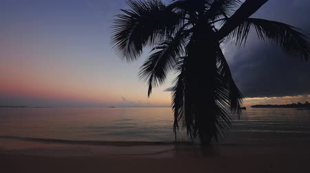 Sunrise over tropical island beach and palm trees. Punta Cana, Dominican Republic. Stok Video