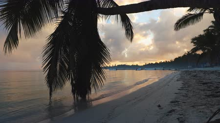 jamaica : Sunrise over tropical island beach and palm trees. Punta Cana, Dominican Republic. Stock Footage