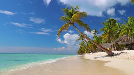 coconut palm tree : Tropical caribbean island Saona, Dominican Republic. Beautiful beach, palm trees and clear sea water