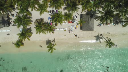 Aerial view of tropical beach with coconut palm trees and beautiful coastline