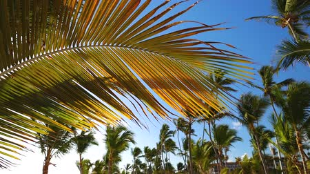 Coconut palm trees against blue tropical sky with clouds. Summer holiday on exotic island. Stok Video
