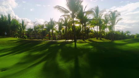 Golf course in luxury tropical resort. Sunset over sport fields, grounds and palm trees. Dostupné videozáznamy