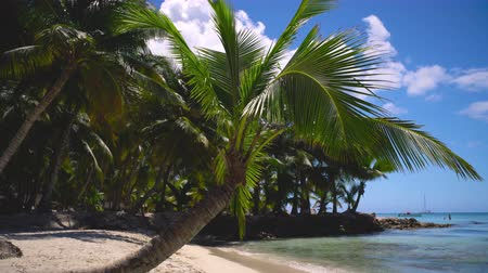 saona : Palm Trees on a tropical beach island Stock Footage
