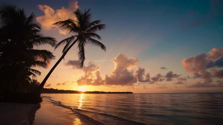 Palm tree and tropical island beach, sunrise