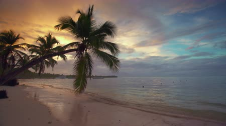 Palm tree and tropical island beach, sunrise shot in Punta Cana, Dominican Republic