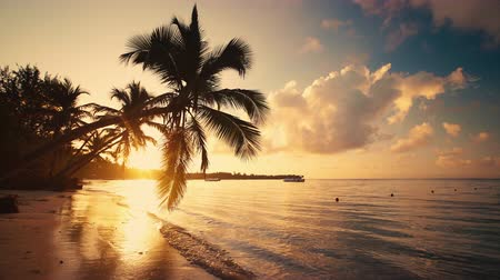 saona : Sea sunrise and exotic beach with palm trees Stock Footage