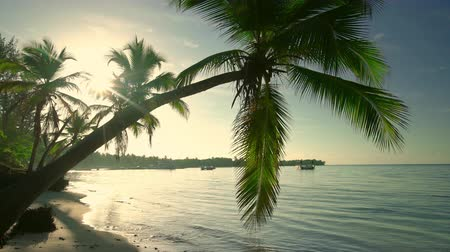 saona : Palm tree and tropical island beach, sunrise shot in Punta Cana, Dominican Republic