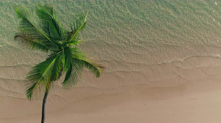 palmtree : Aerial view over tropical palm tree beach, Punta Cana Stock Footage