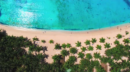 palmtree : Aerial view over tropical palm trees beach, Saona Island Stock Footage