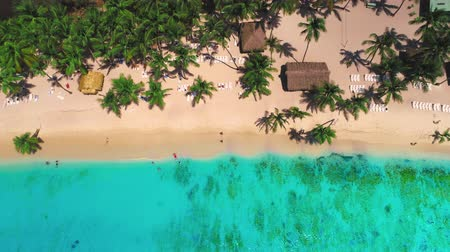 Aerial view over tropical palm trees beach, Saona Island Stok Video