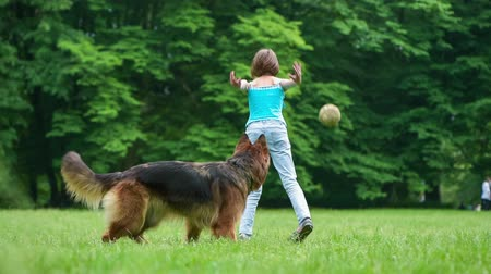 almanca : Little girl and her pet - german shepherd - walking on summer park. Child throws a old ball for dog on the lawn with green grass