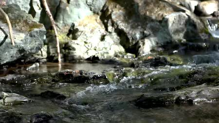 creek : Rocky creek or small river in a forest on a sunny day (Package of 3 scenes, panning left and right)