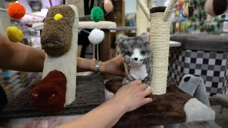 supermarket shelf : Products inside a pet superstore. A close up view of a store assistant arranging a display of cat products inside a pet store, arranging a stuffed toy and scratching pole.