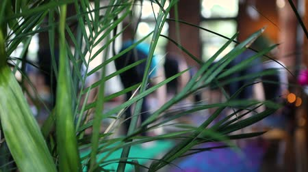 pozisyon : Diverse group of people in yoga class. View from behind an indoor plant pot during a yoga session. Blurry practitioners are seen stretching in the background.