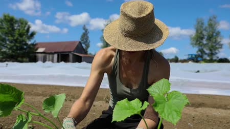 yem : Volunteer work on ecological farm crops. Close up and slow motion footage of a healthy young lady farmer, viewed from the front wearing a traditional woven hat on a sunny day as she plants new crops.