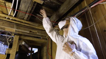 iaq : Indoor damp & air quality (IAQ) testing. A low angle and slow mo clip of a professional residential living quality inspector, standing beneath wooden floorboards and beams with signs of decay & fungi.