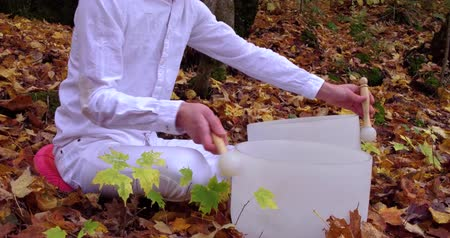 mysticism : Fixed angle from the right side filmed in the forest and showing trees with leaves turned to yellow