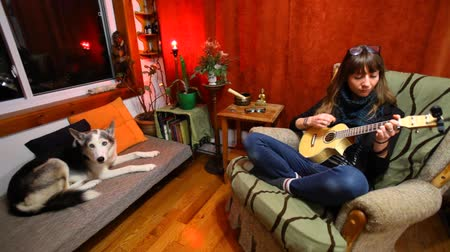 akusztikus : Wide view of a young girl learning how to play ukulele sitting in a sofa in her living room with husky dog Stock mozgókép