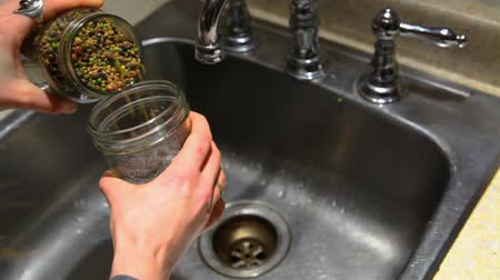 bakliyat : Close up of womans hands putting water in a jar full of of seeds to make sprouts, above the sink - fixed angle
