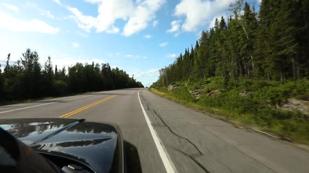 motoring : View from black SUV driving along a highway through a pine forest and nature. The shiny black paint of the hood reflects the sky Stock Footage