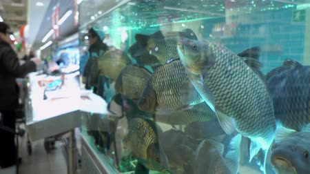 carp : Big carps in the aquarium on fish market on the background of buyers