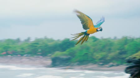 ara : Colourful flying parrot in tropical landscape