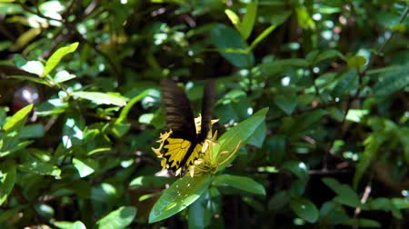 monarca : black and yellow Butterfly on green flower