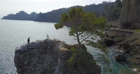 dialect : The Rock of Cadrega, maritime pine tree, aerial view, waterfront between Santa Margherita Ligure and Portofino, Paraggi, Liguria, Italy